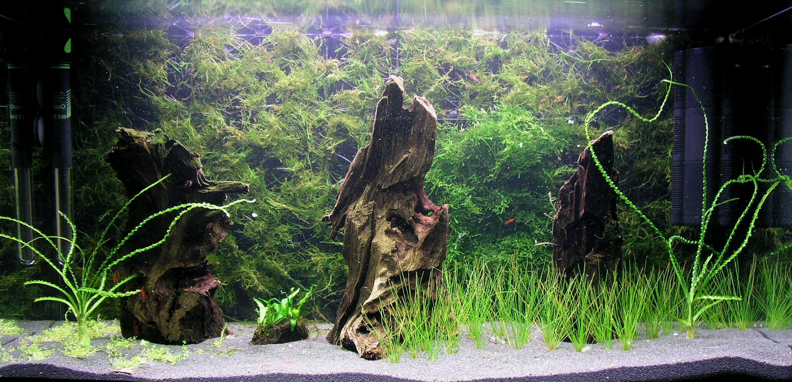 A warning and help needed Neocaridina davidi Shrimp Keepers Forum