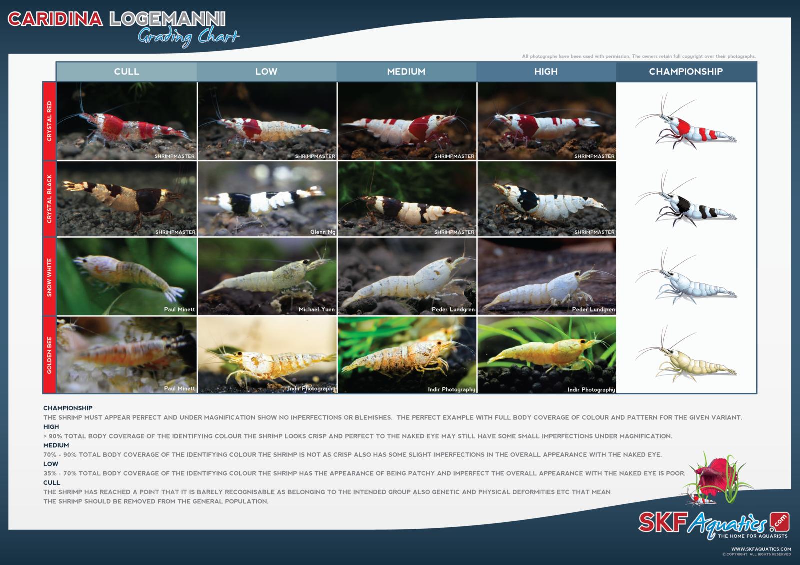 large.SKF_Caridina_Logemanni_Photo_Grades_300dpi.png
