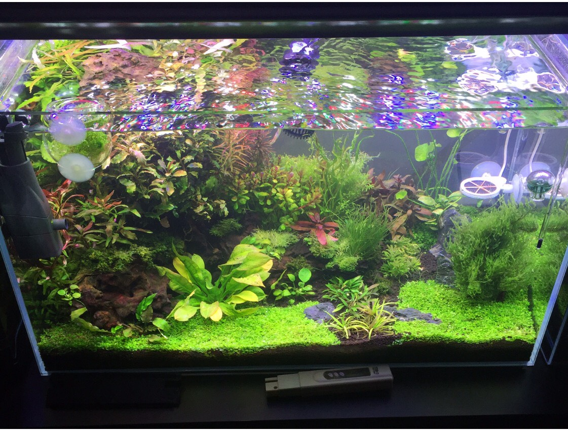 Keeping shrimp in a planted tank dosing tips water for Shrimp fish tank
