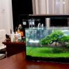 Fish Tank Bonsai